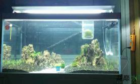 新手急急急鱼缸水族箱鱼缸水族箱谁可以帮我看看我的草都融了一些了鱼缸水族箱是怎么回事啊?开缸3天鱼缸水族箱