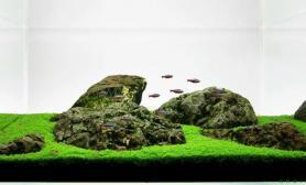 平坦草原上的青石和飞鱼