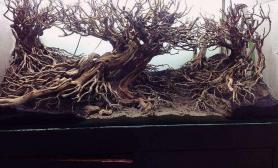这掉渣天的沉木造景水草缸你敢粘莫丝玩吗?