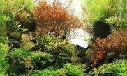 水族箱造景水草状态好得不得了鱼缸水族箱