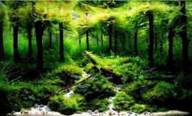 水草造景概论