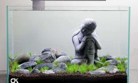 阿弥陀佛水草缸被佛祖保佑的草缸