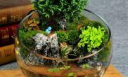 水草造景小圆缸水陆缸景观