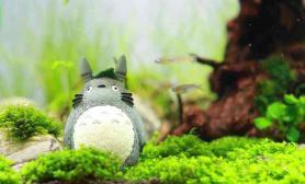 30方缸造景水草缸龙猫梦游记