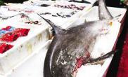 双髻鲨出现海鲜吧桌上菜过度捕捞将列为珍稀物种(图)