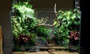 中型原创造景鉴赏水陆缸