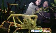 巨型蟹亮相水族馆(图)