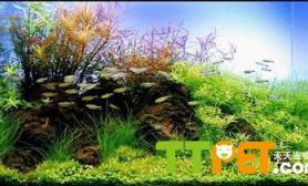 中国式水草造景的知识