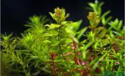 【分享】关于水草园林重生~~~~~水草生长的点点滴滴