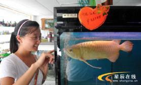 长沙龙鱼标价高达88888元(图)