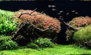 水草缸造景沉木水草泥化妆砂青龙石150CM及以上尺寸设计45