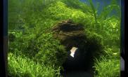 【转载】水中防空洞