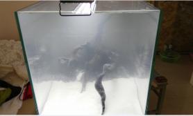 新手第2缸水草缸求意见鱼缸水族箱