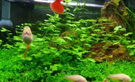我的35小缸水草缸菜鸟一个水草缸随便弄的