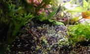海藻面膜还是有效果的