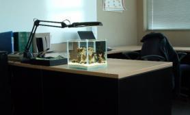 微缸造景书房水草海水珊湖