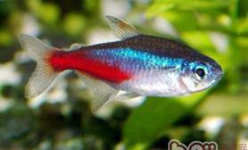什么水质适合观赏鱼生活
