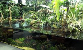 看土豪玩家的超级混养缸水草缸龙、虎、草一个也不放过