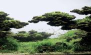 人物专访水草缸造景LongTranHoang