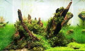 沉木青龙石水草造景45CM及以下尺寸设计38