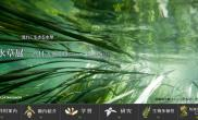 筑波实验植物园水草展2013