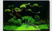 Aquascape of the Month September: