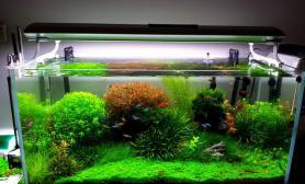 草缸作品欣赏《让人陶醉的景色》荷兰风格