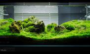 草缸Flickr高清石景缸欣赏