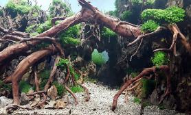 精品水草造景150CM及以上杜鹃根石木