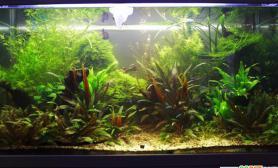 最完美水族造景系列之水草是长成的(二)(多图)