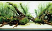 水草缸造景沉木水草泥化妆砂青龙石150CM及以上尺寸设计19