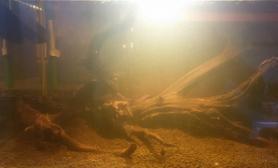 好漂亮的沉木水草缸好黄的水啊鱼缸水族箱