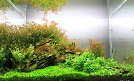2012 ADA世界水族造景大赛参赛作品 寂静的岭
