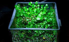 迷你缸里的水上叶造景水草缸路漫长又如何水草缸至少我曾经享受过、拥有过鱼缸水族箱