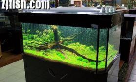 水草缸造景沉木水草泥化妆砂青龙石120CM尺寸设计05