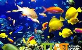 关于热带鱼繁殖的知识要点