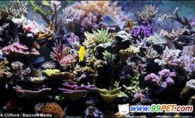 英男子家中培育出绚丽热带珊瑚(多图)