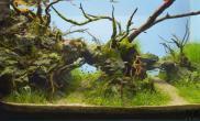 72个精美绝伦的鱼缸造景水草缸你见过几个?