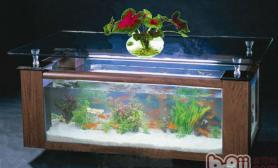 水族箱如何保证合适的光照