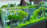 水草缸造景沉木水草泥化妆砂青龙石120CM尺寸设计49