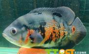 观赏鱼对水温的要求喜欢什么水质