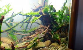 发发家里的5个小缸水草缸献丑了沉木杜鹃根青龙石水草泥
