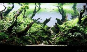 沉木在水草造景中的使用