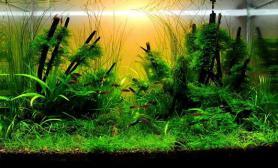 沉木青龙石水草造景45CM及以下尺寸设计33