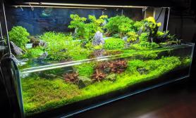 水草生长出水上叶造景