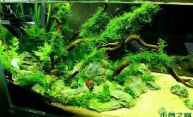 水草造景帮客人开的1图片5米缸1个月景