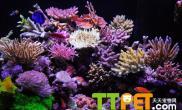 设置岩礁水陆生态缸的方法步骤