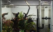 鱼缸造景25方缸翻缸
