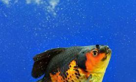 鱼缸水变绿的原因及解决方法(图)