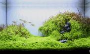 水草造景(60CM)绿色田野